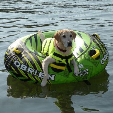 Overton's Dog Life Jacket