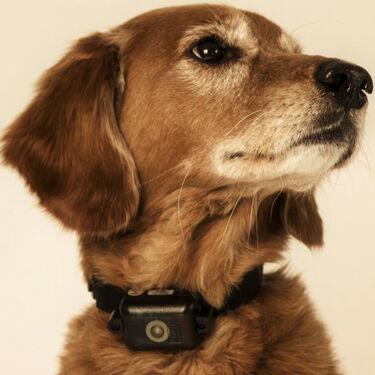 D.T. Systems Ultra Min-e 2090 No Bark Dog Training Collar