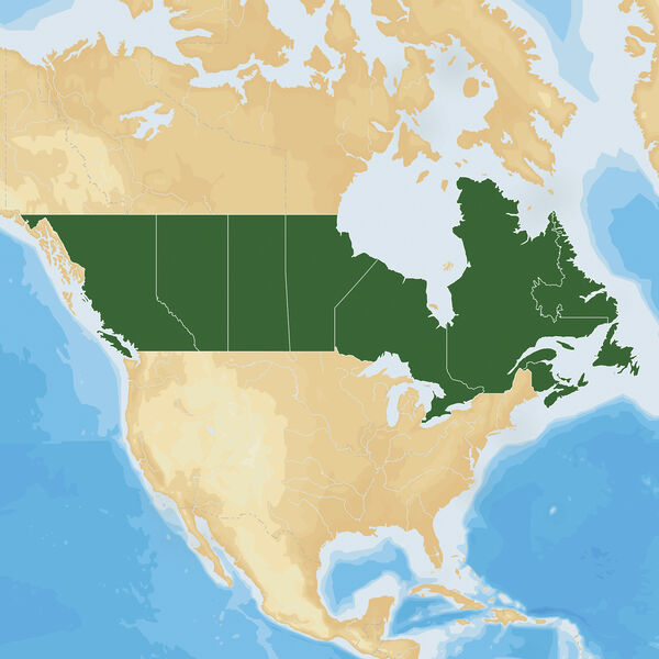Navionics Hot Maps Platinum Cartography, Canada